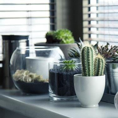 quelles-plantes-pour-depolluer-son-chez-soi-thumbnail.jpg
